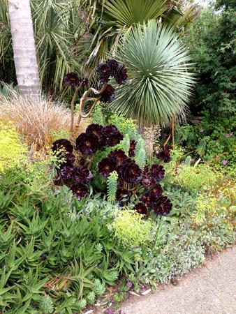 Palm&Succulents_GGPark