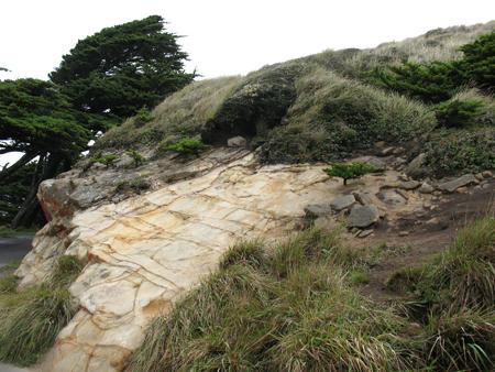 RockandTrees