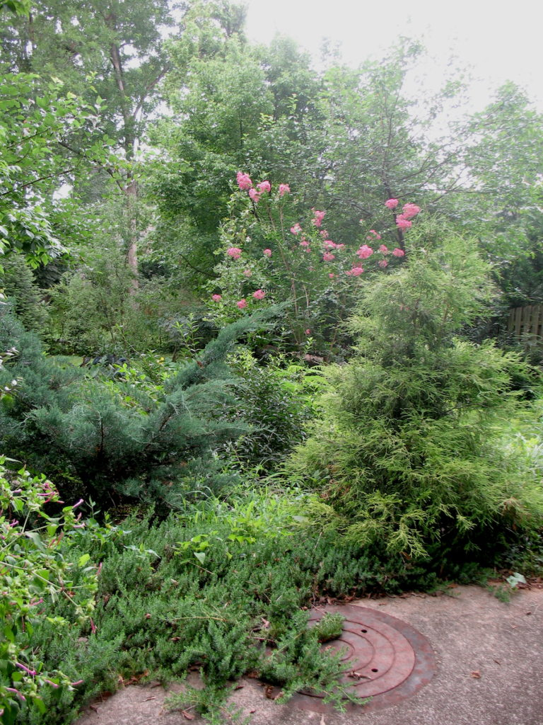 This image has an empty alt attribute; its file name is Junipers-768x1024.jpg